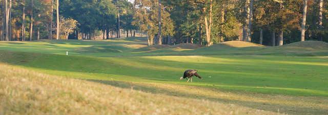 Jones at Sea Trail Golf Resort & Convention Center: #9